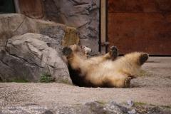 Zoo_Hannover_280417_IMG_4543
