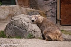 Zoo_Hannover_280417_IMG_4550