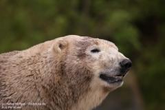 Zoo_Hannover_280417_IMG_4555