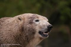 Zoo_Hannover_280417_IMG_4558
