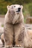 Zoo_Hannover_280417_IMG_4560
