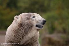 Zoo_Hannover_280417_IMG_4562