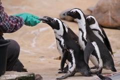 Zoo_Hannover_280417_IMG_4565