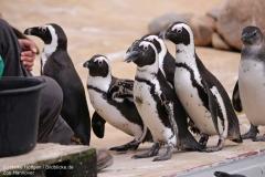 Zoo_Hannover_280417_IMG_4566