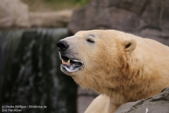 Zoo_Hannover_280417_IMG_4583