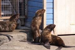 Zoo-Hannover-280510-IMG_2236