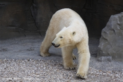 Zoo-Hannover-280510-IMG_2277