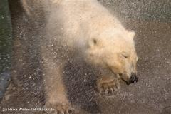 Zoo-Hannover-280510-IMG_2325