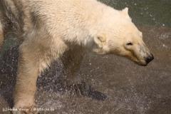 Zoo-Hannover-280510-IMG_2328-2