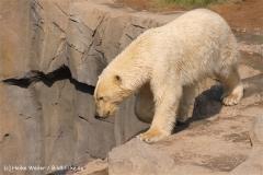 Zoo-Hannover-280510-IMG_2354