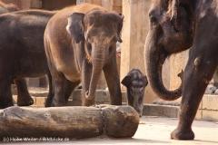Zoo-Hannover-280510-IMG_2593