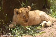 Zoo Hannover 290411- IMG_1748