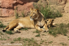 Zoo Hannover 290411- IMG_1803