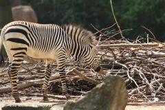 Zoo Hannover 290411- IMG_2002