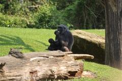 Zoo Hannover 290411- IMG_2010
