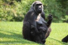 Zoo Hannover 290411- IMG_2011-2