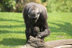 Zoo Hannover 290411- IMG_2033