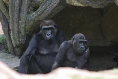 Zoo Hannover 290411- IMG_2043