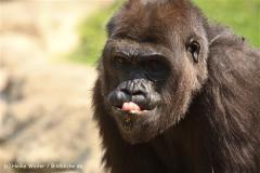 Zoo Hannover 290411- IMG_2045-2