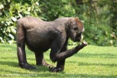 Zoo Hannover 290411- IMG_2057-2