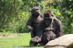 Zoo Hannover 290411- IMG_2071