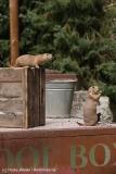 Zoo_Hannover_290716_IMG_6688