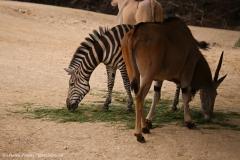 Zoo_Hannover_290716_IMG_6559
