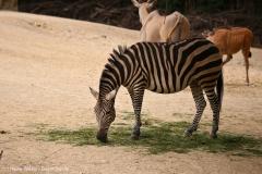Zoo_Hannover_290716_IMG_6561