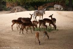 Zoo_Hannover_290716_IMG_6565