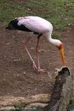 Zoo_Hannover_290716_IMG_6566