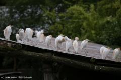Zoo_Hannover_290716_IMG_6567