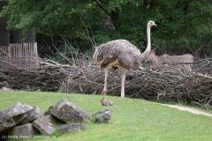 Zoo_Hannover_290716_IMG_6578
