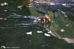 Zoo_Hannover_290716_IMG_6581