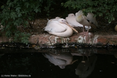 Zoo_Hannover_290716_IMG_6584