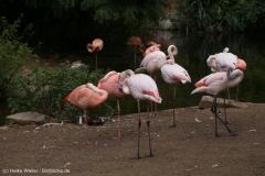 Zoo_Hannover_290716_IMG_6598