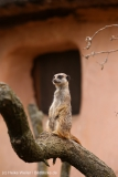 Zoo_Hannover_290716_IMG_6634