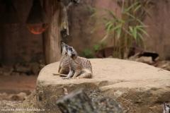 Zoo_Hannover_290716_IMG_6637