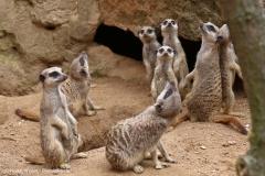 Zoo_Hannover_290716_IMG_6640