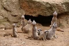 Zoo_Hannover_290716_IMG_6642
