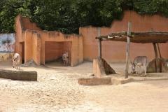 Zoo_Hannover_290716_IMG_6645