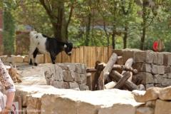 Zoo_Hannover_290716_IMG_6651