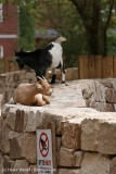 Zoo_Hannover_290716_IMG_6653