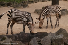 Zoo_Hannover_290716_IMG_6662