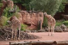 Zoo_Hannover_290716_IMG_6664