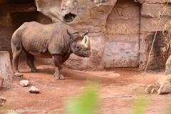 Zoo_Hannover_290716_IMG_6667