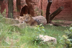 Zoo_Hannover_290716_IMG_6673