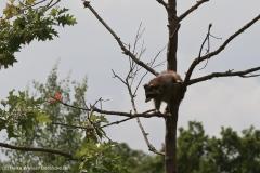 Zoo_Hannover_290716_IMG_6680