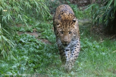 Zoo_Hannover_290716_IMG_6759