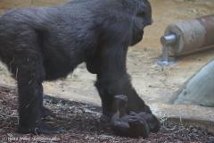 Zoo_Hannover_301015_IMG_0642