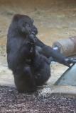 Zoo_Hannover_301015_IMG_0645